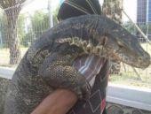 Genç adam komodo ejderini böyle kucakladı