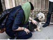 İran'da köpek besleyenlere kırbaç cezası