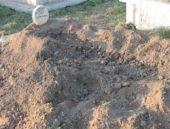 Ayılar mezarlıklara dadandı!