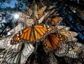 2014 yılının muhteşem doğa fotoğrafları