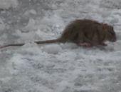 İstanbul o kadar soğuk ki fareler bile..