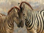 Zebra çizgisinin gizemi çözüldü! Meğer...