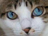 Değişik göz rengi ile şaşırtan hayvanlar