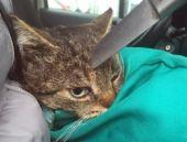 Kafasında bıçakla gezen kedi!