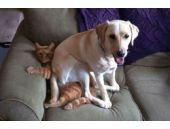 Kıskanç köpek bakın kediye ne yaptı...