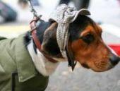 Köpekler güvenilmez kişileri ayırt edebiliyor