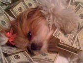 Zengin köpekler sosyal medyayı salladı!