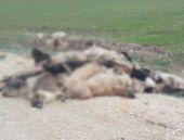 Bursa'da inanılmaz köpek katliamı