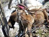 Asker Şırnak'ta 8 katırı öldürdü