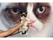 Bu kedi milyonlarca dolara sahip!