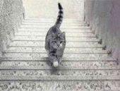 YSK Başkanı şaşırttı: Bütün kedileri topladık!