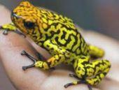 'Küresel ısınma 6 canlı türünden birisini yok edebilir'