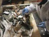 359 yıllık cesette böbrek taşı bulundu