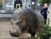 Gürcistan: Selde hayvanat bahçesindeki hayvanlar kaçtı