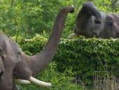 Almanya: Sirkten kaçan fil adam öldürdü