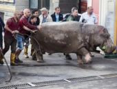 Gürcistan'ı vahşi hayvanlar bastı
