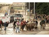 Vahşi hayvanlar şehri ele geçirdi