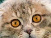 Annelerinden erken ayrılan kediler 'strese giriyor'