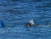 Annesi, oğlunun köpek balığıyla boğuşmasını canlı yayında izledi