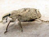 Kırşehir'de yeni bir böcek türü bulundu