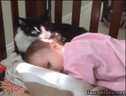 Kedi bebeği kendi yavrusu zannederse!