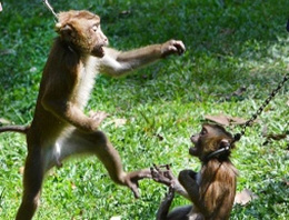Sirk maymununa yürek burkan işkence