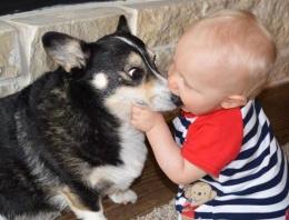 Bebekle köpeğin bu fotoğrafı rekor kırdı