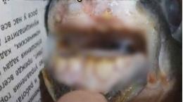 Balığın ağzını gören gözlerine inanamadı!