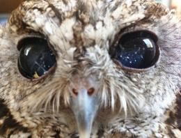 Bu baykuşun gözlerinde uzay var