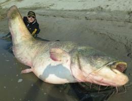 Oltayla2,7 metrelik balık yakaladı
