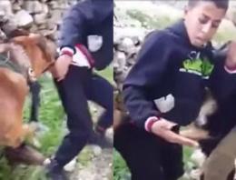 İsrail 'köpekleri' gençleri saldırdı