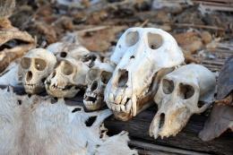 Yeni insan türü bulundu! Dişleri çok farklı