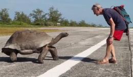 Çiftleşmesi kesilen kaplumbağanın intikamı!