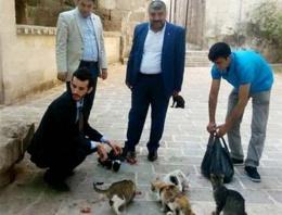 MHP adayı trafolar için kedileri topladı