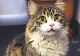 CHP'nin kedisi Şero'dan Baykal'a imalı tweet