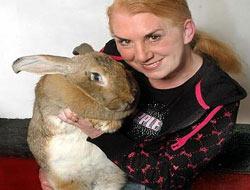 Dünyanın en büyük tavşanı