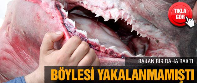 Bursa'da köpekbalığı! Son 10 yılda bir ilk
