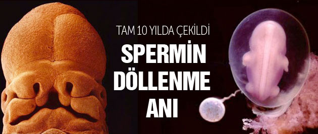 Spermin döllenme anını bile çekti müthiş kare