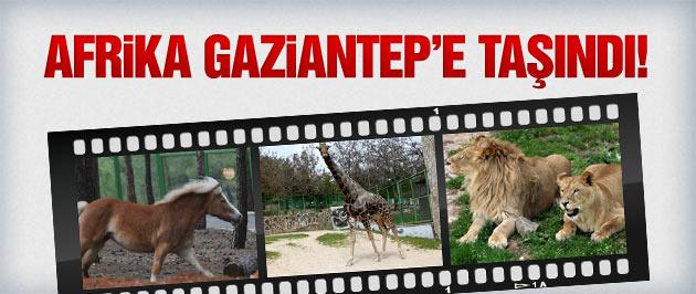 Gaziantep Hayvanat Bahçesi Safari Parkı 23 Nisan'da açılıyor!