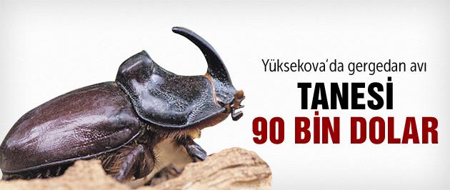 Yüksekova'da Gergedan avı başladı!