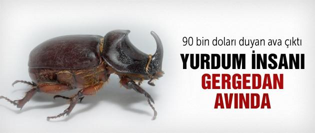 Türkiye gergedan böceği avına çıktı!
