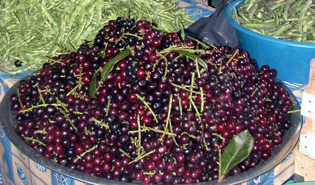 Karayemişin faydaları? Karayemiş meyvesi nelere iyi gelir