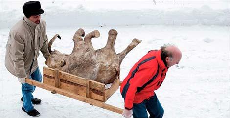 42 bin yıldır donmuş vaziyette