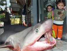 Ankarada köpekbalığı heyecanı