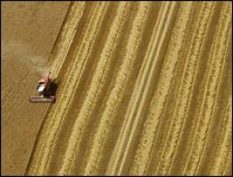 Yılın ilk buğdayı Polatlı'da satıldı