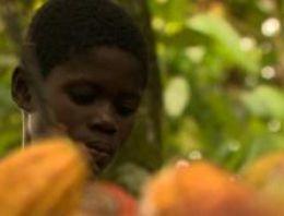 Nestle, çocuk işçi sorununa 'önlem alıyor'