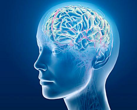 3 boyutlu dijital beyin atlası hazır