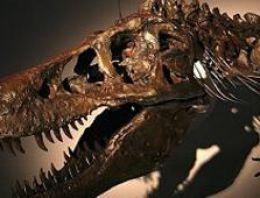 Fosil satışı Moğolistan'ı kızdırdı