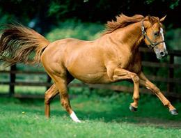 Acil uyarı: Şimdi de at gribi!