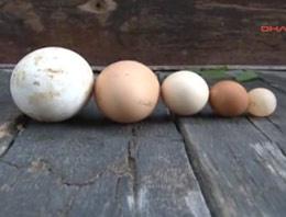Sivaslıları şoka uğratan yumurtalar!